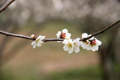 有田近郊 武雄・伊万里の梅花薫る(2014.03.07)