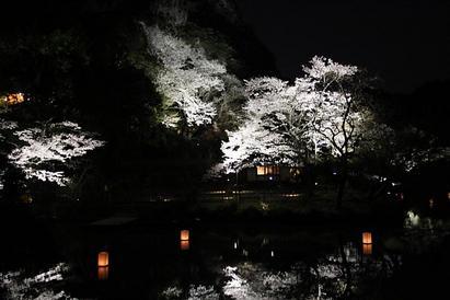 桜だより(Part Ⅰ)   武雄市・御船山楽園の桜